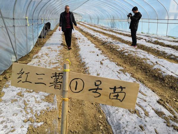恩施州建始槐坦村红薯类产业脱贫众筹项目.png
